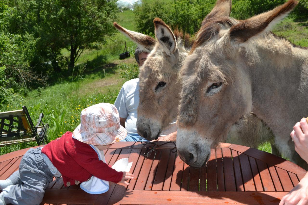2 ânes et un bébé