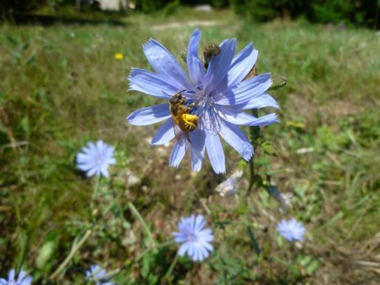 fleur butinée