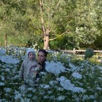 Feerie de fleurs