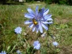 Fleur butinee 2