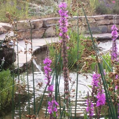 Fleurs d eau