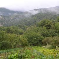 Jardin sous la brume