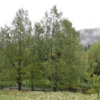 L etang fleuri sous la brume matinale